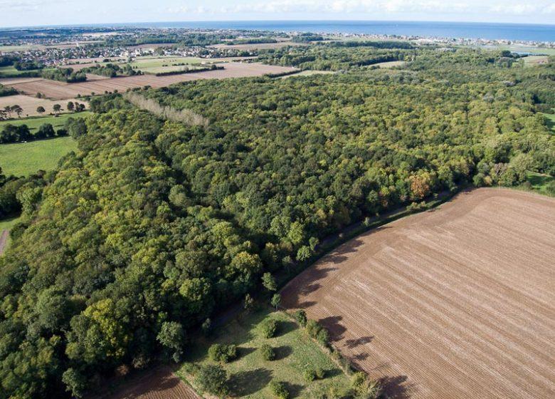 Bois du Caprice Calvados (2)