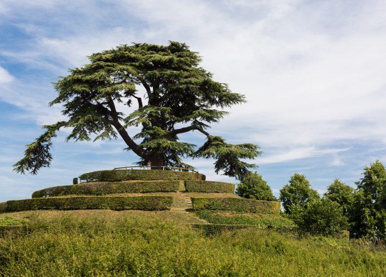 CAEN – PARC – MICHEL – D'ORNANO – CEDRE – DU – LIBAN – CAEN LA MER TOURISME – JUIN – 2017-1