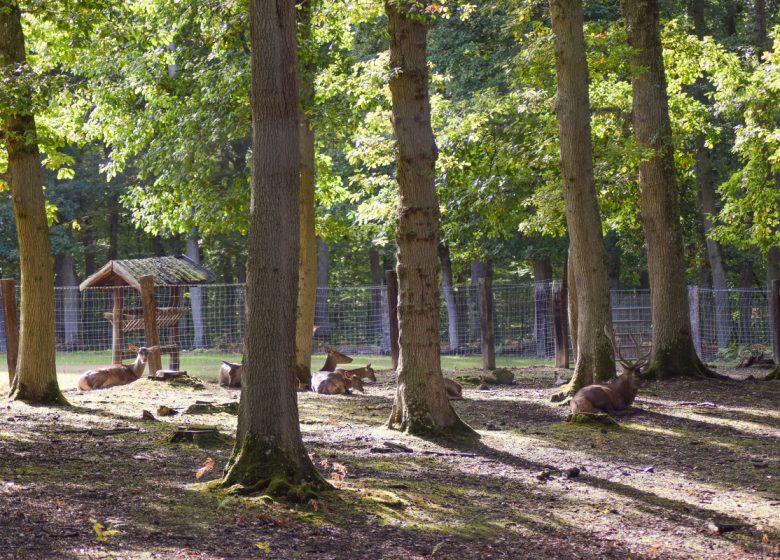 Parc animalier forêt de Grimbosq