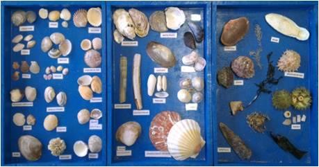 Séance milieu marin