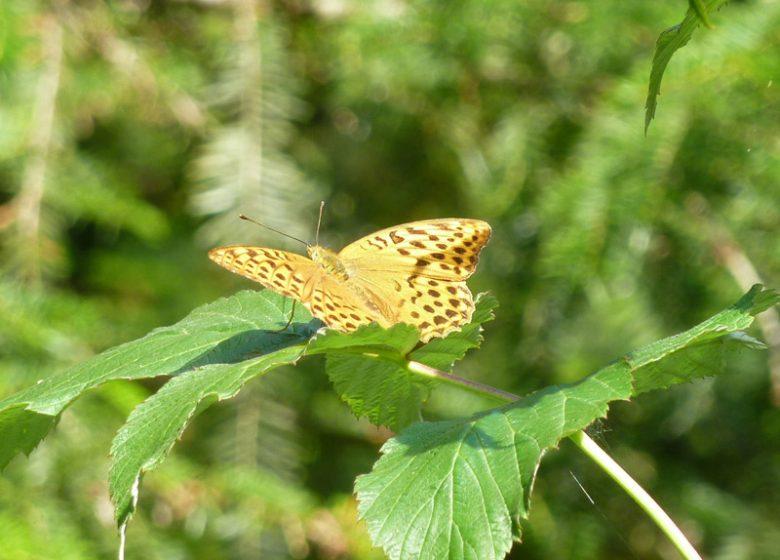 Papillon feuille nature