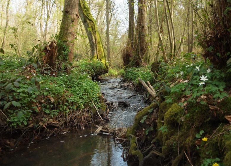 Ruisseau forêt Grimbosq